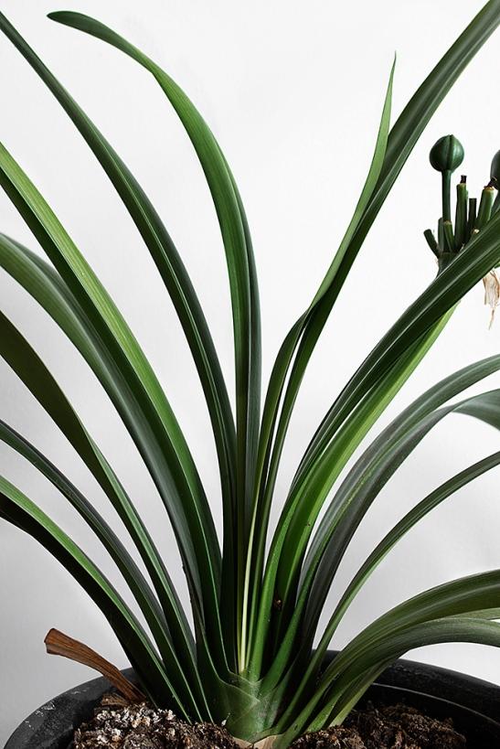 Fantastic-Frank-Plant