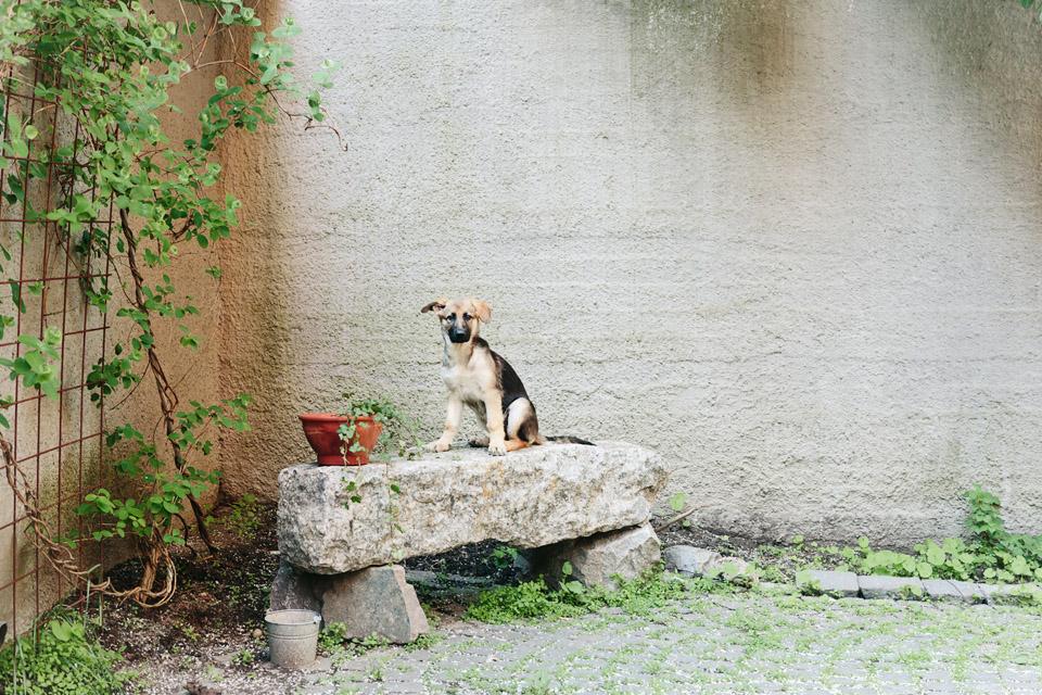 Hundvalp