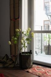 Balkong Norr Mälarstrands Blommor