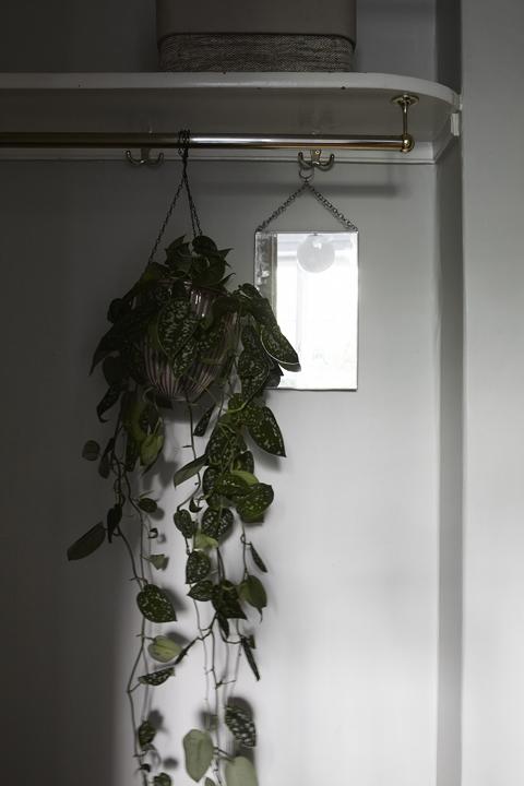 växt klädhängare