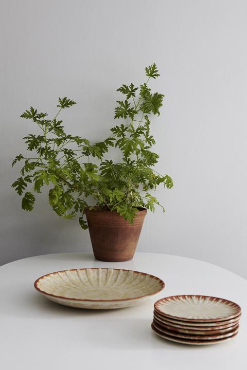 växt tallrikar