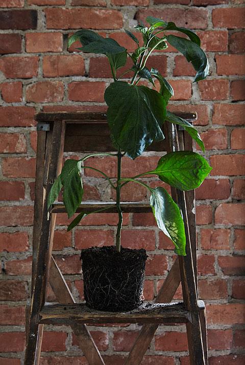 Växt pall tegel Långholmsgatan