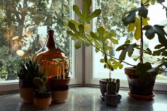 fönsterbräda blommor vaser