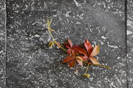 Marmor blomma
