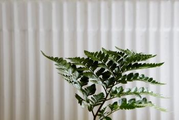 Växt  blad grönt