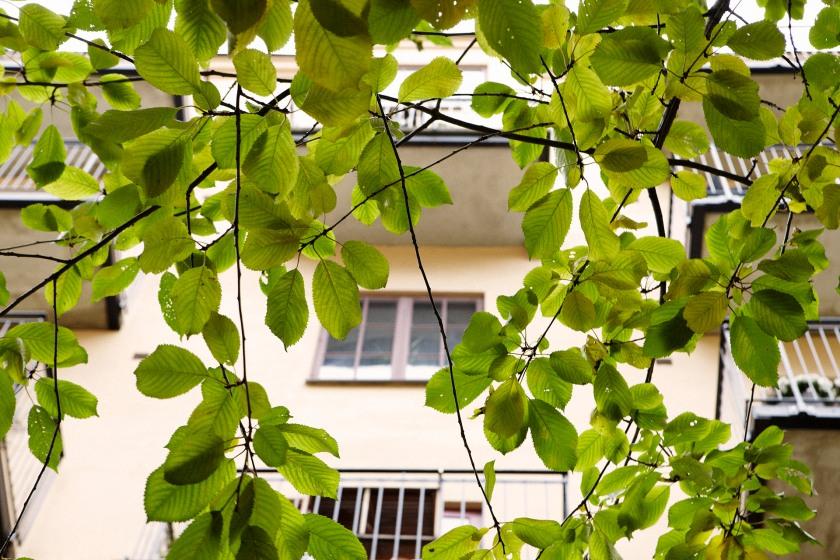 Träd  blad