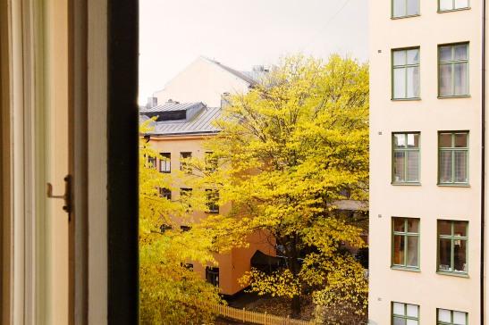 Fönster utsikt höst