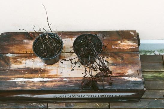 Trälåda växt balkong