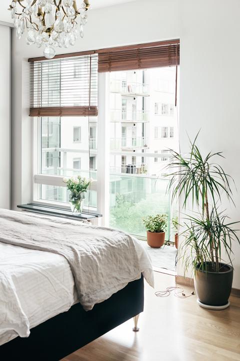 Säng palm fönster