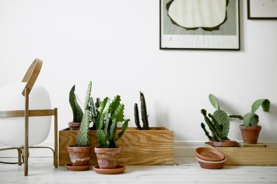 Växt kaktus konst