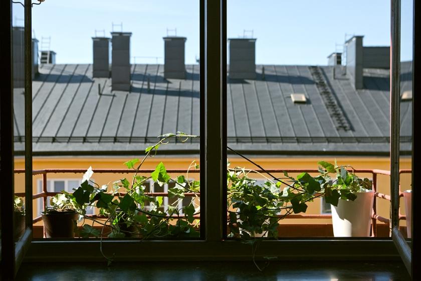 Fönster utsikt växter krukor