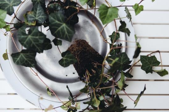 Kruka växt balkong