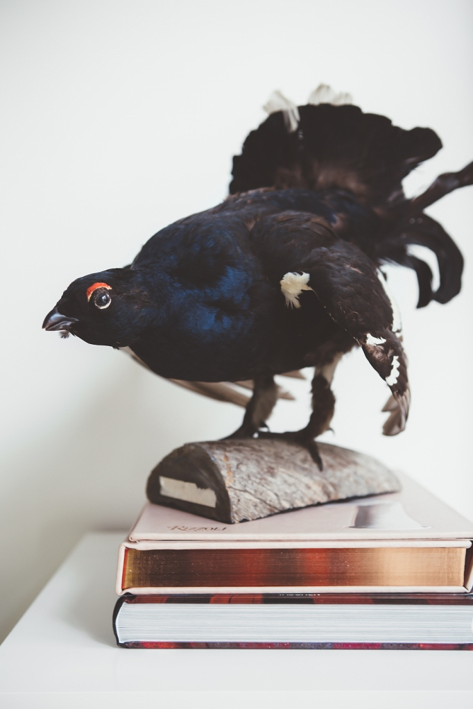 Uppstoppad fågel böcker