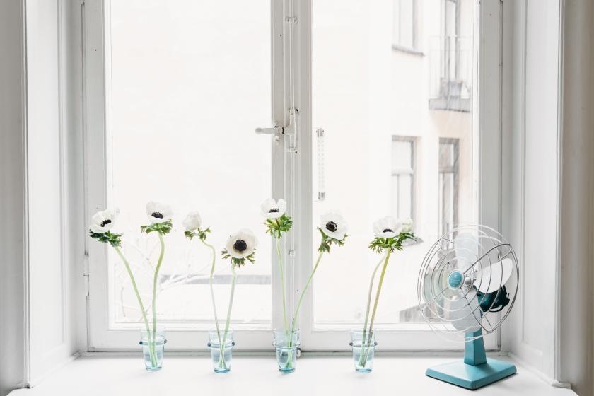 Fönster fönsterkarm blommor fläkt