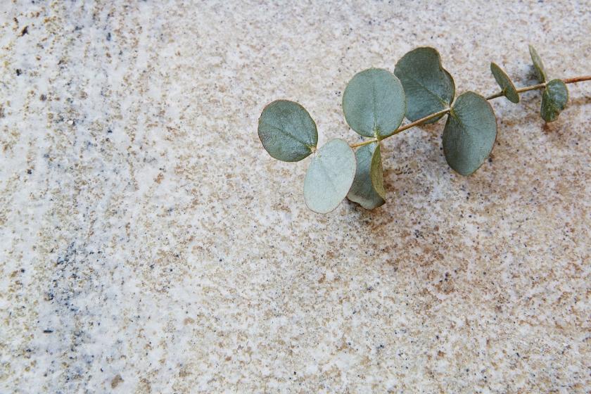 sten eukalyptus