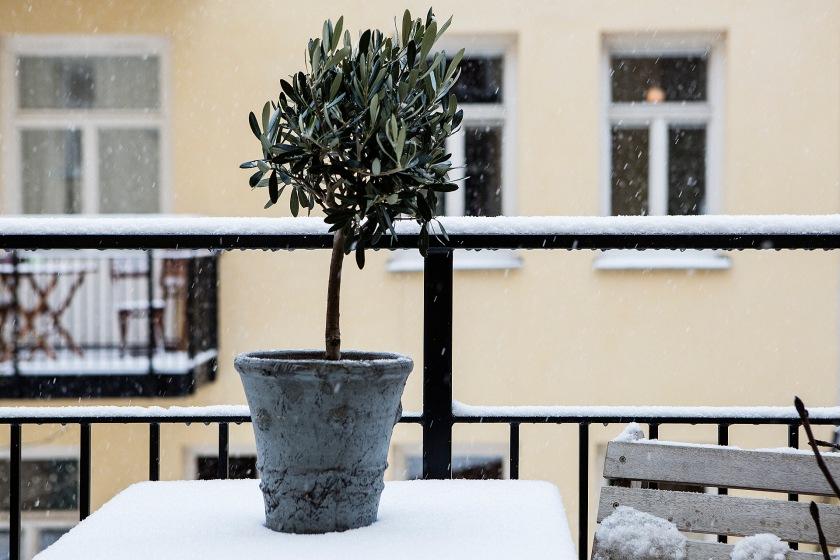 balkong träd kruka vinter
