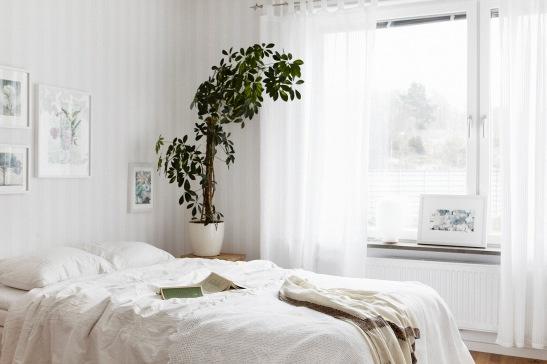 Sovrum växt säng vitt