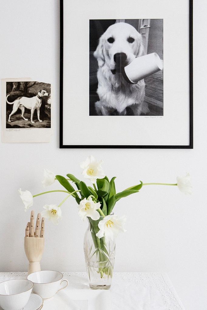 tulpaner hand hund tavla foto