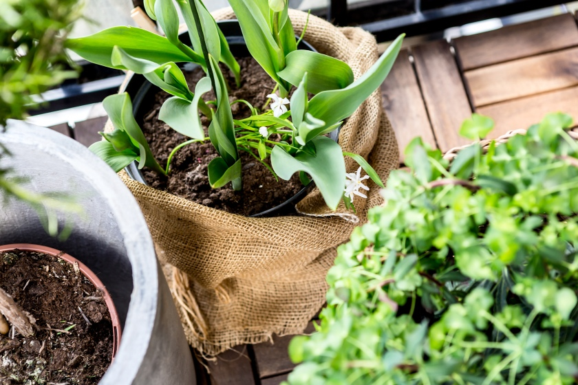 Norrort balkong grönt växter blommor