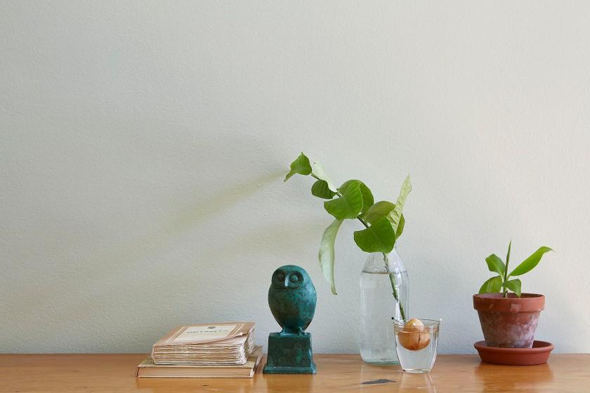 Drottningholmsvägen 2 stockholm owl books gren plant water fantastic frank