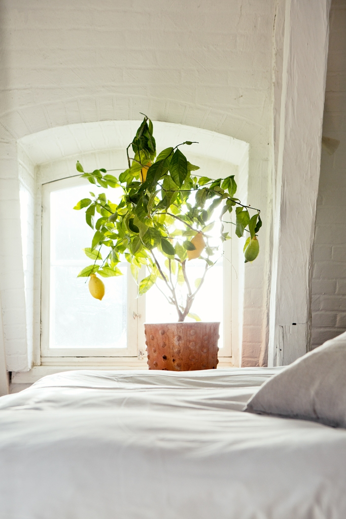 köpmanngatan window lemon tree white bedroom Fantastic Frank