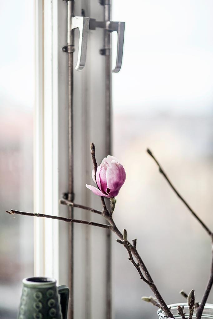 Anna Malmberg Josefine delavall Kristinehovsgatan window