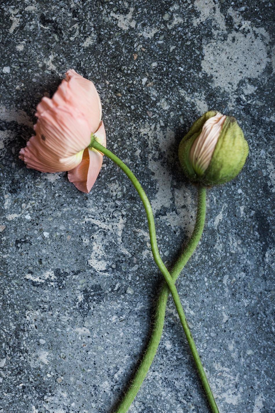 bondegatan-stileben-marmor-blommor-fantastic-frank